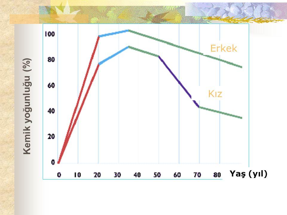 Erkek Kız Yaş (yıl) Kemik yoğunluğu (%)