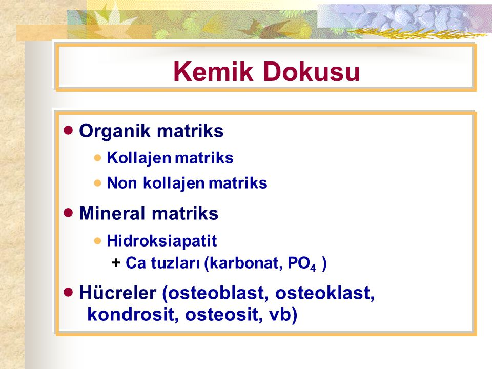 Kemik Dokusu  Organik matriks  Kollajen matriks  Non kollajen matriks  Mineral matriks  Hidroksiapatit + Ca tuzları (karbonat, PO 4 )  Hücreler (osteoblast, osteoklast, kondrosit, osteosit, vb)