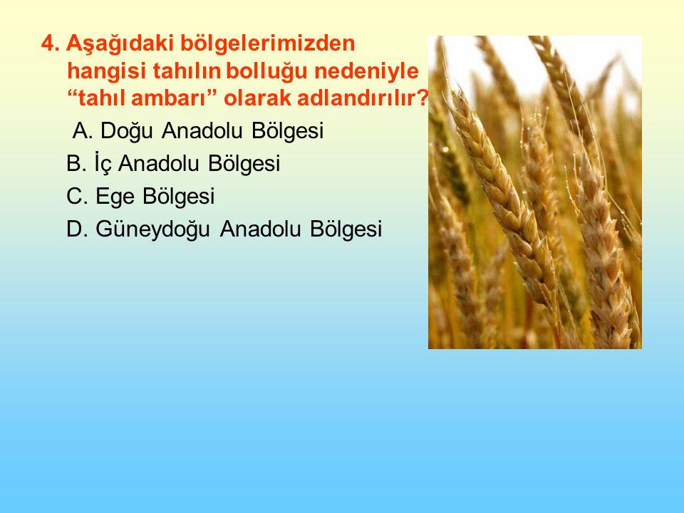 4.Aşağıdaki bölgelerimizden hangisi tahılın bolluğu nedeniyle tahıl ambarı olarak adlandırılır.