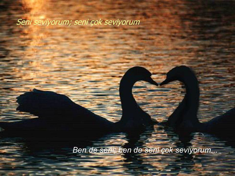 Seni seviyorum; seni çok seviyorum Ben de seni; ben de seni çok seviyorum...