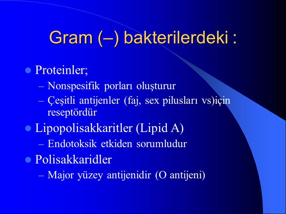 Gram (–) bakterilerdeki : Proteinler; – Nonspesifik porları oluşturur – Çeşitli antijenler (faj, sex pilusları vs)için reseptördür Lipopolisakkaritler