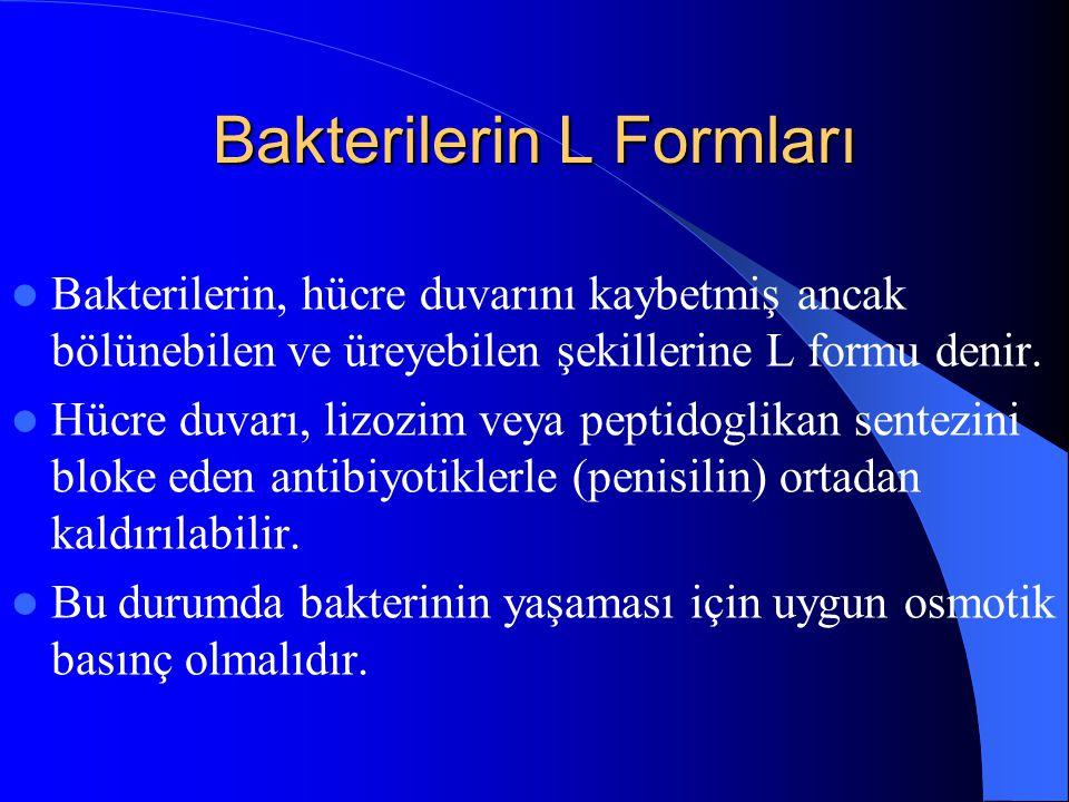 Bakterilerin L Formları Bakterilerin, hücre duvarını kaybetmiş ancak bölünebilen ve üreyebilen şekillerine L formu denir. Hücre duvarı, lizozim veya p