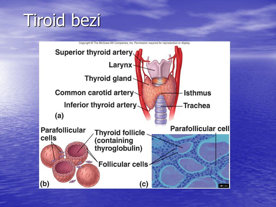 NODÜL NODÜL İİAB İİAB Benign Foliküler Neoplazi Malign Tanı için yetersiz Gözlem veya Sintigrafi Cerrahi İİAB tekrar T4 tedavisi Sıcak Soğuk veya normoaktif Sıcak Soğuk veya normoaktif Hipertiroidizm Cerrahi veya Hipertiroidizm Cerrahi veya yönünden tetkik T4 tedavisi yönünden tetkik T4 tedavisi