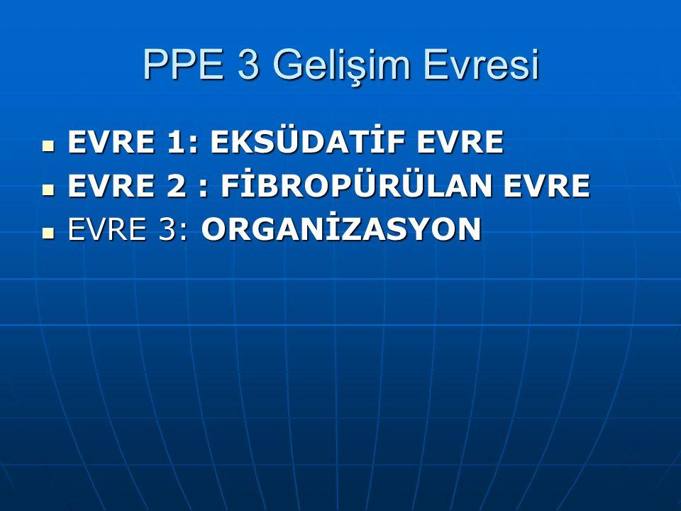 PPE 3 Gelişim Evresi EVRE 1: EKSÜDATİF EVRE EVRE 1: EKSÜDATİF EVRE EVRE 2 : FİBROPÜRÜLAN EVRE EVRE 2 : FİBROPÜRÜLAN EVRE EVRE 3: ORGANİZASYON EVRE 3: