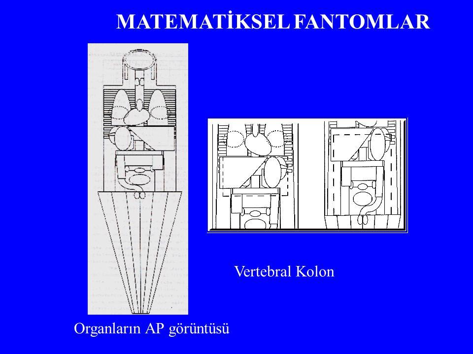 Vertebral Kolon Organların AP görüntüsü MATEMATİKSEL FANTOMLAR