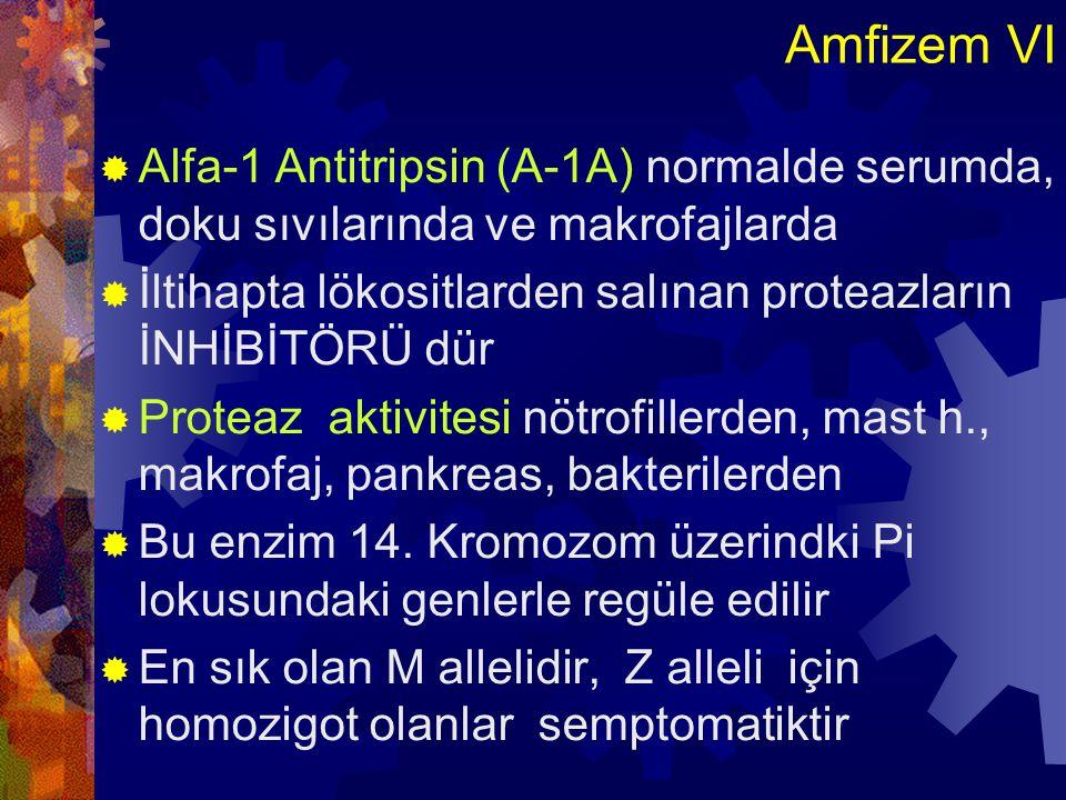 Amfizem VII  1- Elastazın temel kaynağı olan lökositlerin kapillerlerden alveol boşluğuna çıkması  2- Akc de lökositlerin sayısını artıran veya degranüle olmalarını sağlayan uyaranlarile elastolitik aktivite artar  3- Serumda A-1A eksikliği durumundaelastik doku harabiyeti kontrol edilemez ve amfizem o.ç