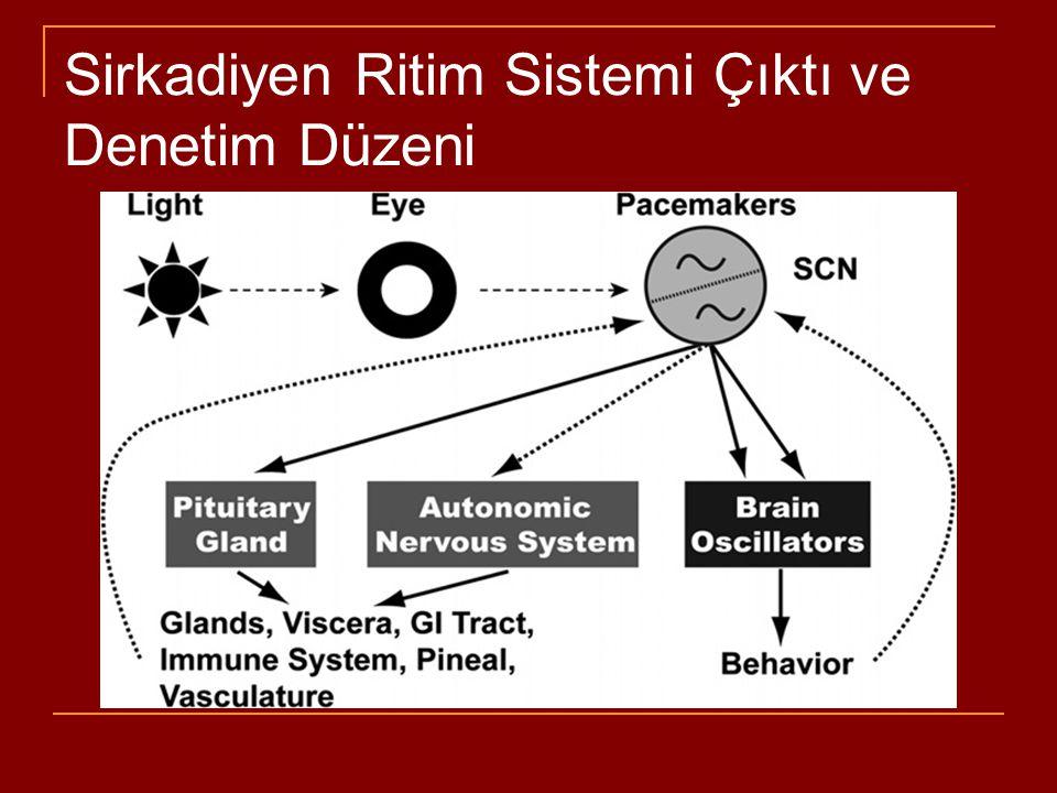Uyku - Uyanıklık Forebrain ve kortikal arousal/uyanma davranışı >>> beyinsapı üst kısmında pon- midbrain bileşkesi yakınından çıkan yolaklar Talamus ve bazal forebrain'e uzanan projeksiyonlarıyla farklı bir çok nöron topluluğu uyanıklığı yönetir