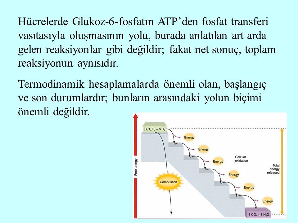 Hücrelerde Glukoz-6-fosfatın ATP'den fosfat transferi vasıtasıyla oluşmasının yolu, burada anlatılan art arda gelen reaksiyonlar gibi değildir; fakat