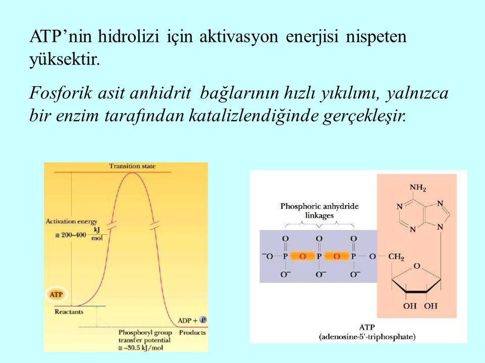 ATP'nin hidrolizi için aktivasyon enerjisi nispeten yüksektir. Fosforik asit anhidrit bağlarının hızlı yıkılımı, yalnızca bir enzim tarafından kataliz