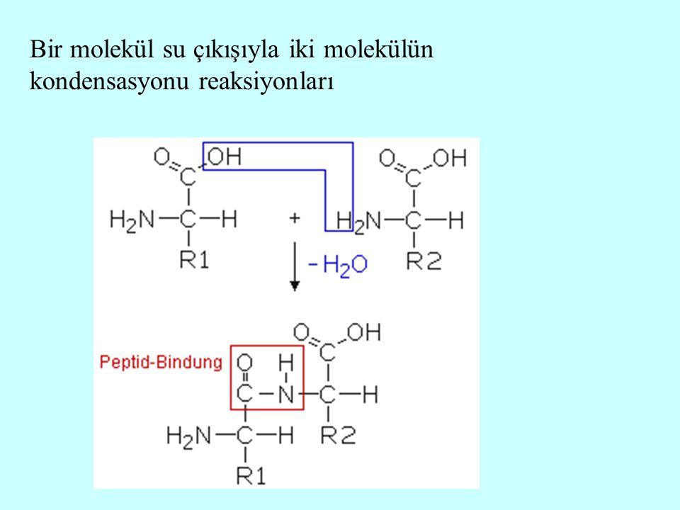 Bir molekül su çıkışıyla iki molekülün kondensasyonu reaksiyonları