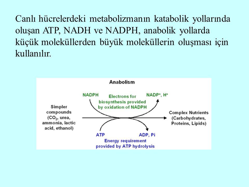 Canlı hücrelerdeki metabolizmanın katabolik yollarında oluşan ATP, NADH ve NADPH, anabolik yollarda küçük moleküllerden büyük moleküllerin oluşması iç