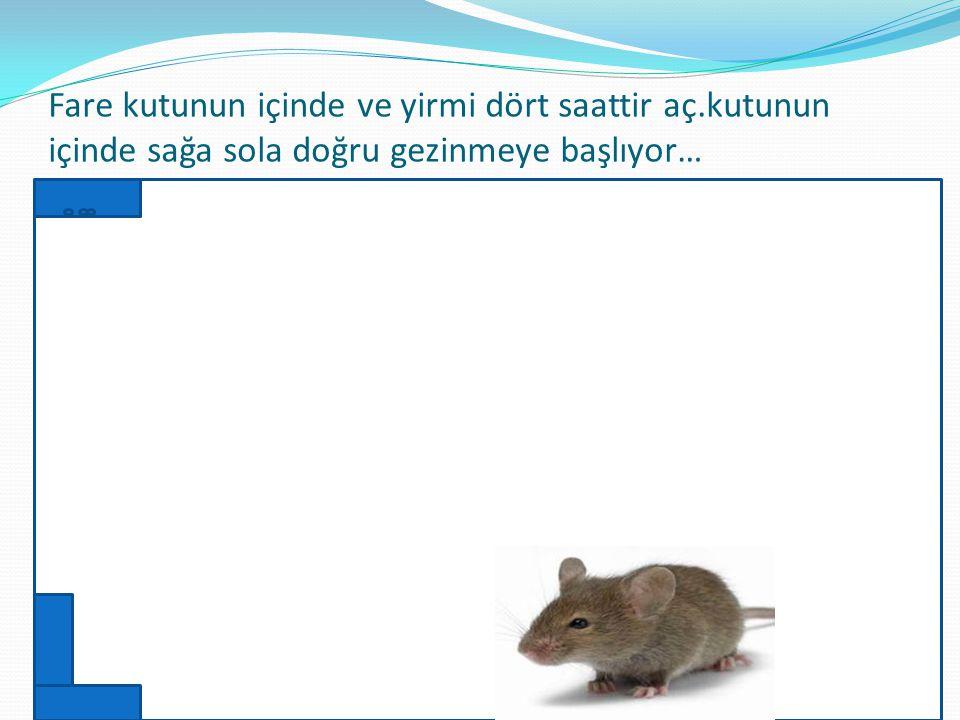 Fare kutunun içine bırakılıyor ve deney için bir gün boyunca fareye hiçbir yiyecek verilmiyor.