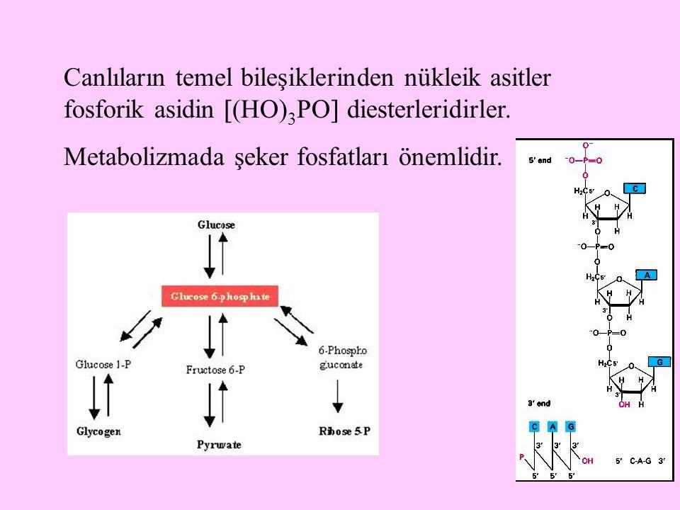 11 Canlıların temel bileşiklerinden nükleik asitler fosforik asidin  (HO) 3 PO  diesterleridirler. Metabolizmada şeker fosfatları önemlidir.