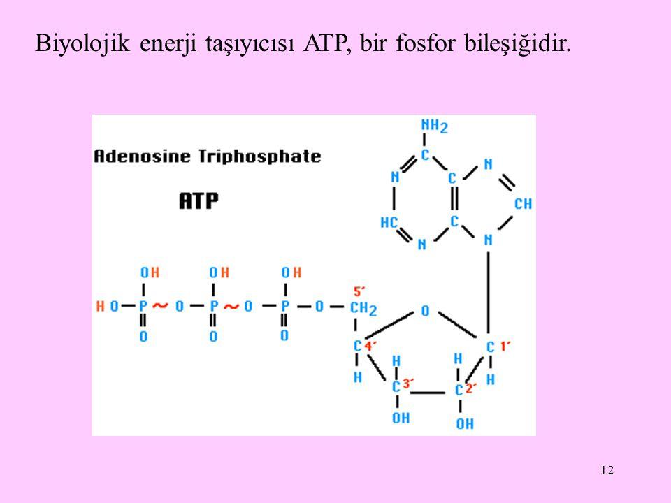 12 Biyolojik enerji taşıyıcısı ATP, bir fosfor bileşiğidir.