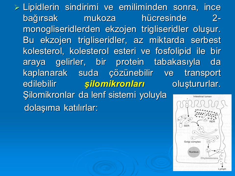  Lipidlerin sindirimi ve emiliminden sonra, ince bağırsak mukoza hücresinde 2- monogliseridlerden ekzojen trigliseridler oluşur. Bu ekzojen trigliser