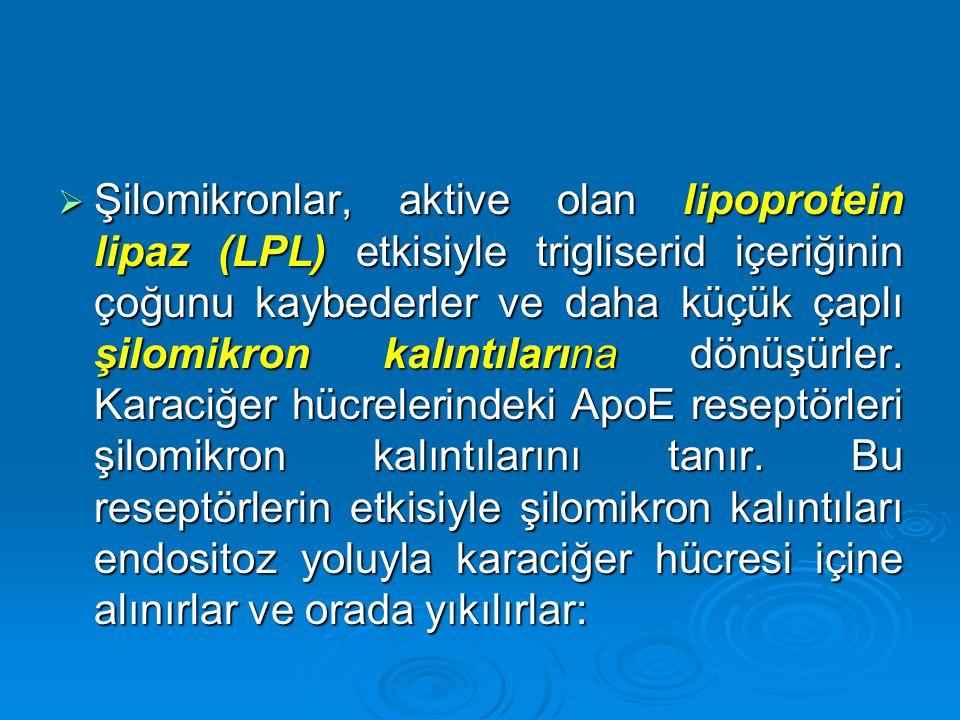  Şilomikronlar, aktive olan lipoprotein lipaz (LPL) etkisiyle trigliserid içeriğinin çoğunu kaybederler ve daha küçük çaplı şilomikron kalıntılarına