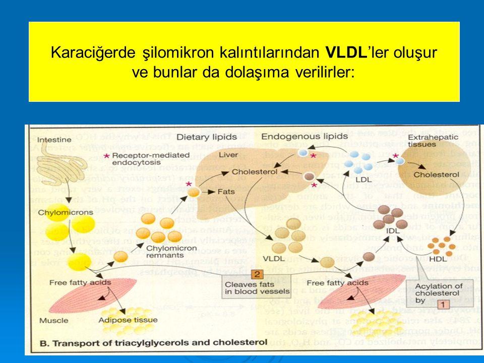 Karaciğerde şilomikron kalıntılarından VLDL'ler oluşur ve bunlar da dolaşıma verilirler: