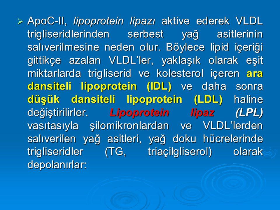  ApoC-II, lipoprotein lipazı aktive ederek VLDL trigliseridlerinden serbest yağ asitlerinin salıverilmesine neden olur. Böylece lipid içeriği gittikç