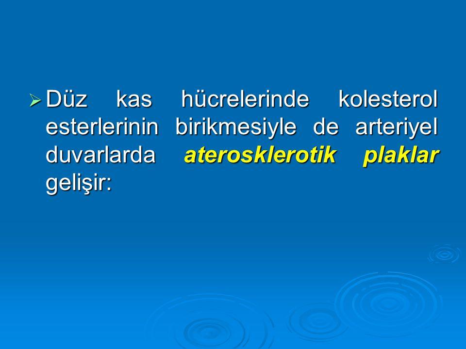  Düz kas hücrelerinde kolesterol esterlerinin birikmesiyle de arteriyel duvarlarda aterosklerotik plaklar gelişir: