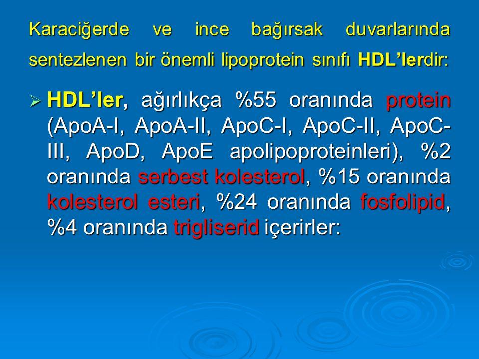 Karaciğerde ve ince bağırsak duvarlarında sentezlenen bir önemli lipoprotein sınıfı HDL'lerdir:  HDL'ler, ağırlıkça %55 oranında protein (ApoA-I, Apo