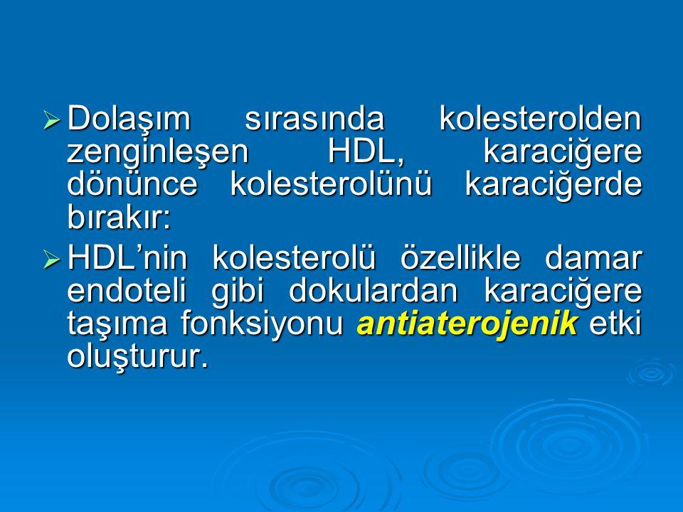  Dolaşım sırasında kolesterolden zenginleşen HDL, karaciğere dönünce kolesterolünü karaciğerde bırakır:  HDL'nin kolesterolü özellikle damar endotel