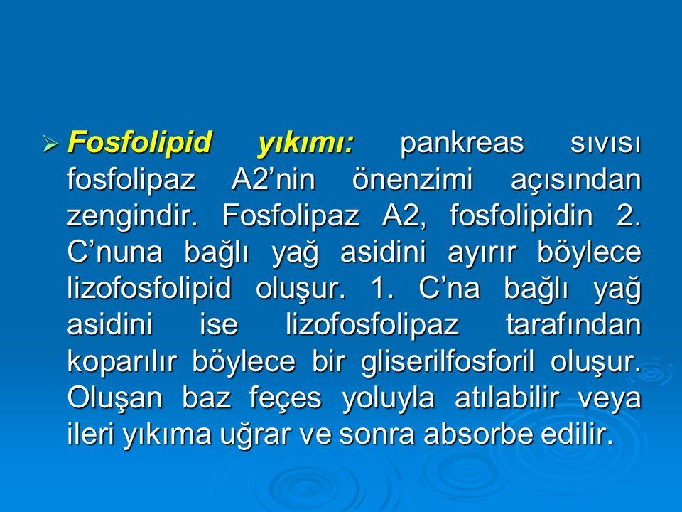  Fosfolipid yıkımı: pankreas sıvısı fosfolipaz A2'nin önenzimi açısından zengindir. Fosfolipaz A2, fosfolipidin 2. C'nuna bağlı yağ asidini ayırır bö