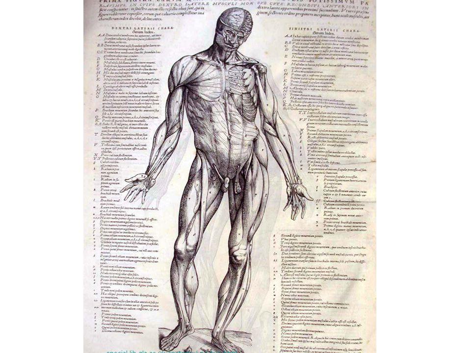 Vesalius's special.lib.gla.ac.uk/anatomy/vesalius.html