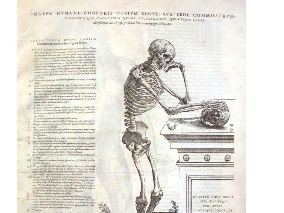 Vesalius, De Humani Corporus fabrica (1543) - Vesalius  www.jahsonic.com/Anatomy.html www.jahsonic.com/Anatomy.html
