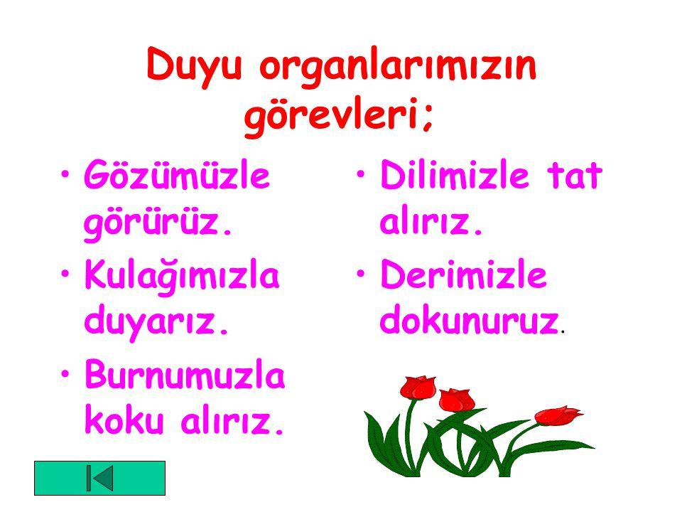 Duyu organlarımız; Göz Kulak Burun Dil Deridir.