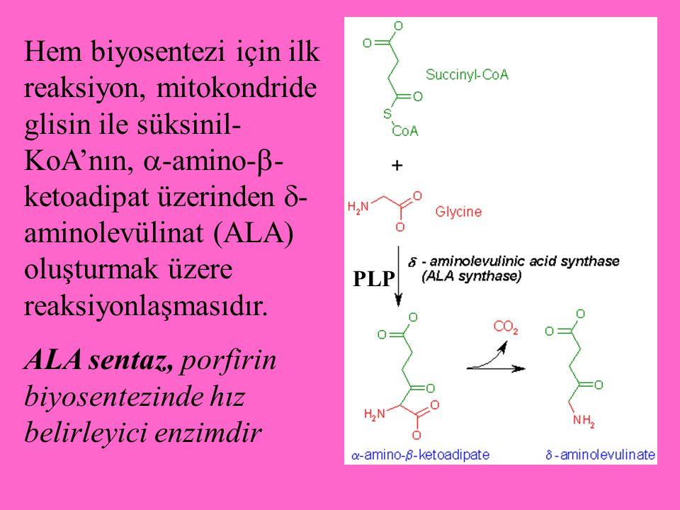 Hem biyosentezi için ilk reaksiyon, mitokondride glisin ile süksinil- KoA'nın,  -amino-  - ketoadipat üzerinden  - aminolevülinat (ALA) oluşturmak