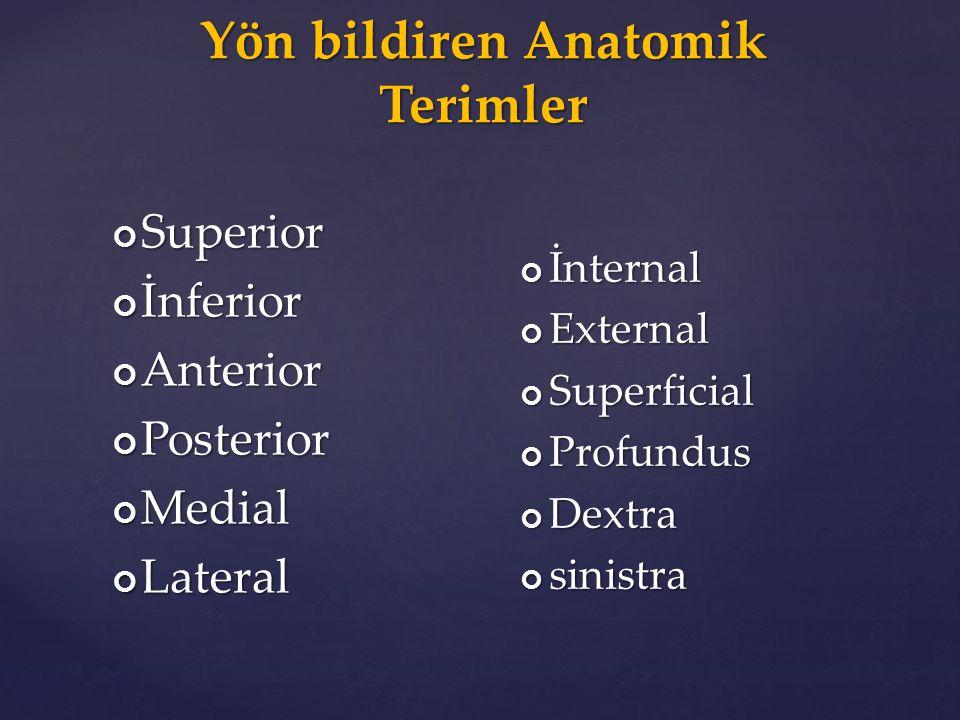 Yön bildiren Anatomik Terimler SuperiorİnferiorAnteriorPosteriorMedialLateral İnternalExternalSuperficialProfundusDextrasinistra