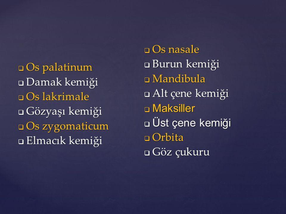  Os palatinum  Damak kemiği  Os lakrimale  Gözyaşı kemiği  Os zygomaticum  Elmacık kemiği  Os nasale  Burun kemiği  Mandibula  Alt çene kemi