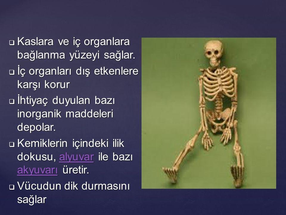  Kaslara ve iç organlara bağlanma yüzeyi sağlar.  İç organları dış etkenlere karşı korur  İhtiyaç duyulan bazı inorganik maddeleri depolar.  Kemik