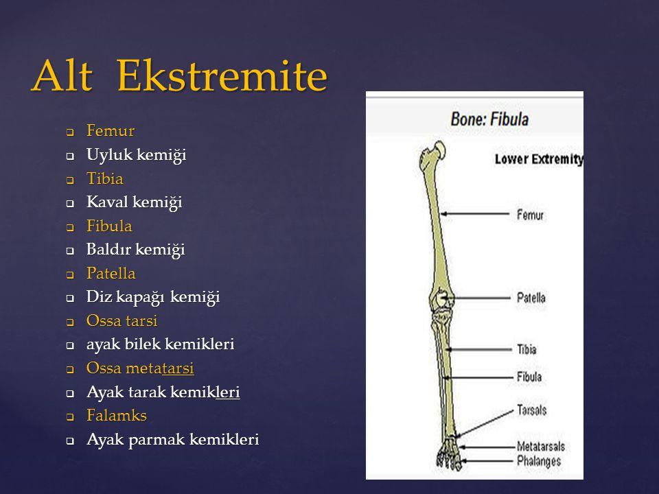  Femur  Uyluk kemiği  Tibia  Kaval kemiği  Fibula  Baldır kemiği  Patella  Diz kapağı kemiği  Ossa tarsi  ayak bilek kemikleri  Ossa metata