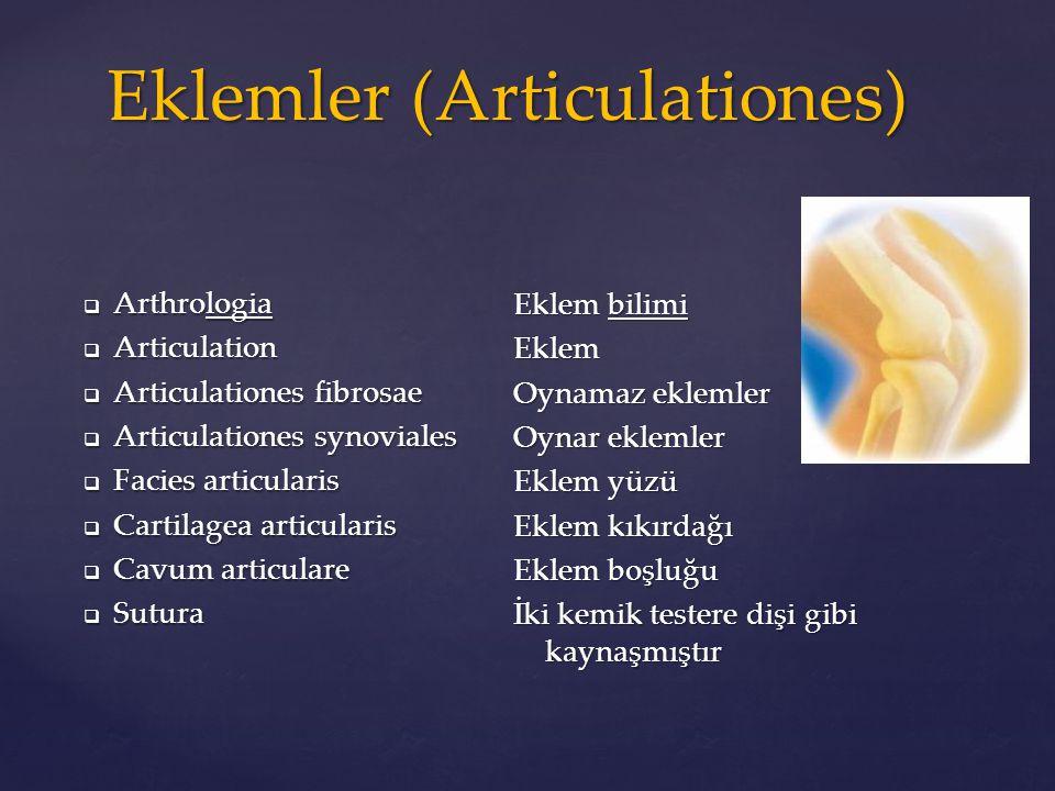  Arthrologia  Articulation  Articulationes fibrosae  Articulationes synoviales  Facies articularis  Cartilagea articularis  Cavum articulare 