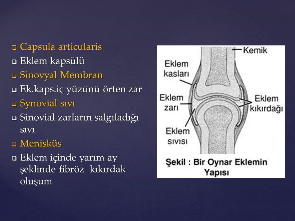  Capsula articularis  Eklem kapsülü  Sinovyal Membran  Ek.kaps.iç yüzünü örten zar  Synovial sıvı  Sinovial zarların salgıladığı sıvı  Menisküs