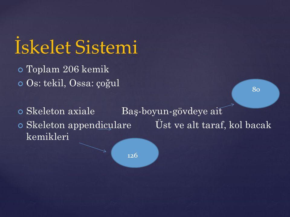  Os palatinum  Damak kemiği  Os lakrimale  Gözyaşı kemiği  Os zygomaticum  Elmacık kemiği  Os nasale  Burun kemiği  Mandibula  Alt çene kemiği  Maksiller  Üst çene kemiği  Orbita  Göz çukuru