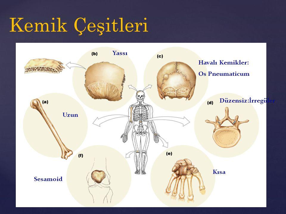 Kemik Çeşitleri Uzun Kısa Yassı Düzensiz:İrregüler Sesamoid Havalı Kemikler: Os Pneumaticum