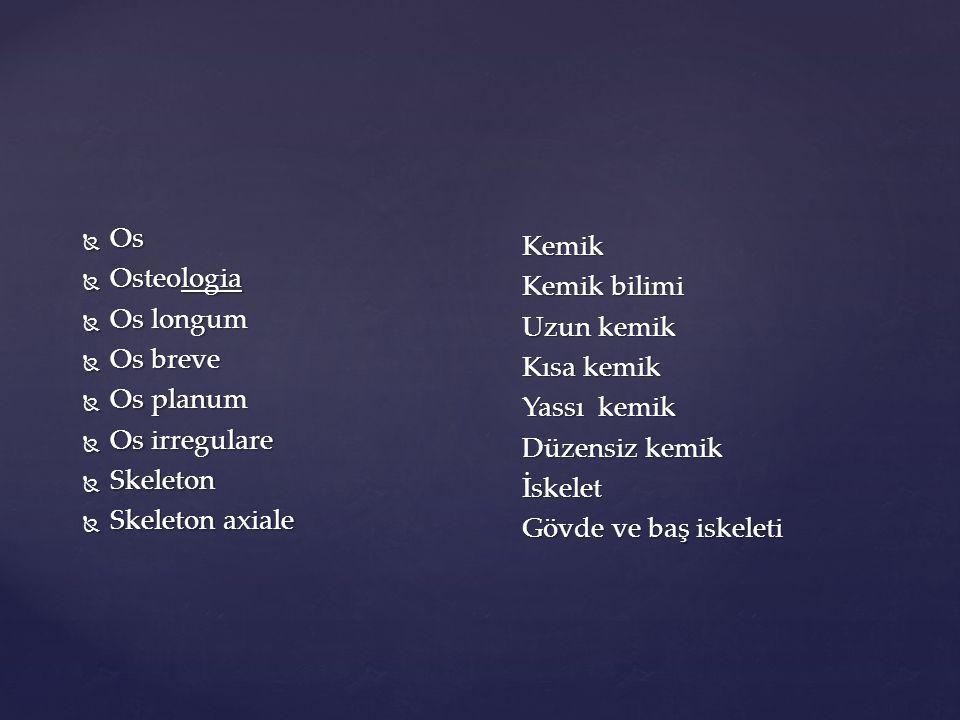 İSKELET SİSTEMİ ANATOMİK TERİMLER  ANLAMLARI Göğüs Kafesi (Toraks)Anatomik Terimleri Göğüs Kafesi (Toraks)Anatomik Terimleri