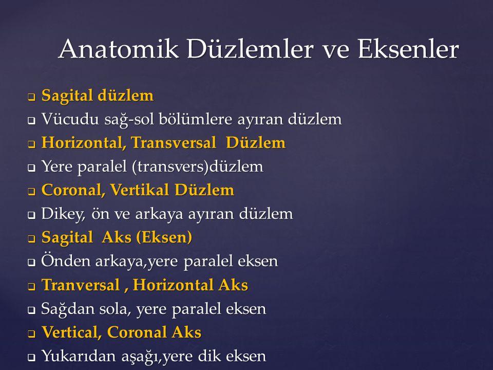  Columna vertebral e s  Omurga  Vertebra  Omur  Vertebrae cervical e s  Boyun Omurları (7)  Canalis vertebralis  Omurların ortasındaki Kanal  Vertebra thoracicae,  Göğüs Omurları (12)  Vertebra lumbales  Bel Omurları (5)  Os sacrum  Kuyruk Sokumu Kemiği Omurga (Vertebral Kolon) Anatomik Terimleri Omurga (Vertebral Kolon) Anatomik Terimleri