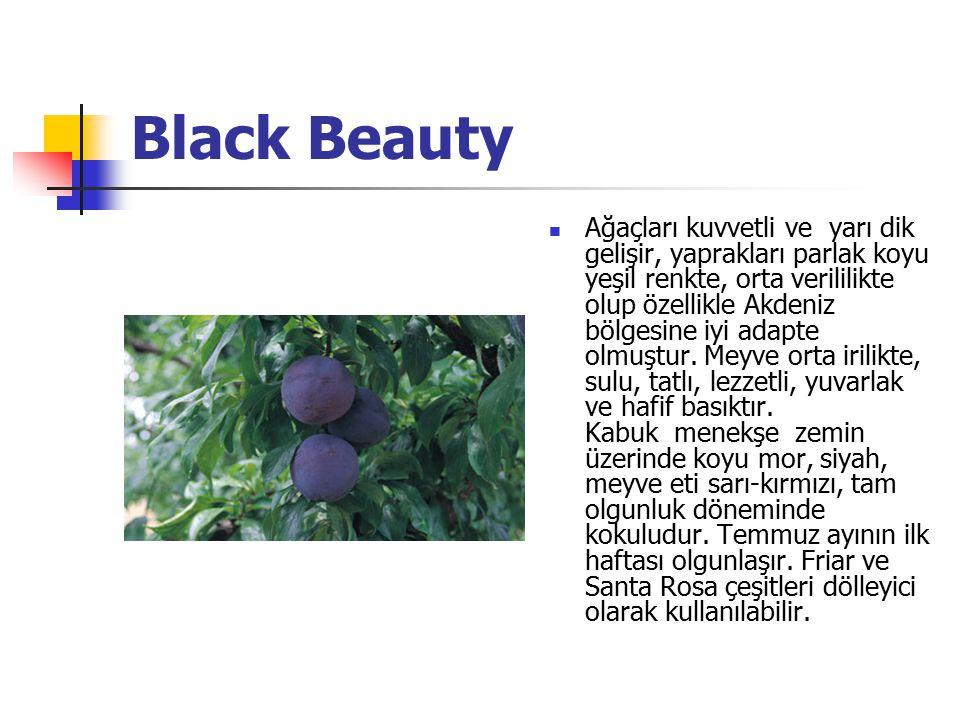 Black Beauty Ağaçları kuvvetli ve yarı dik gelişir, yaprakları parlak koyu yeşil renkte, orta verililikte olup özellikle Akdeniz bölgesine iyi adapte
