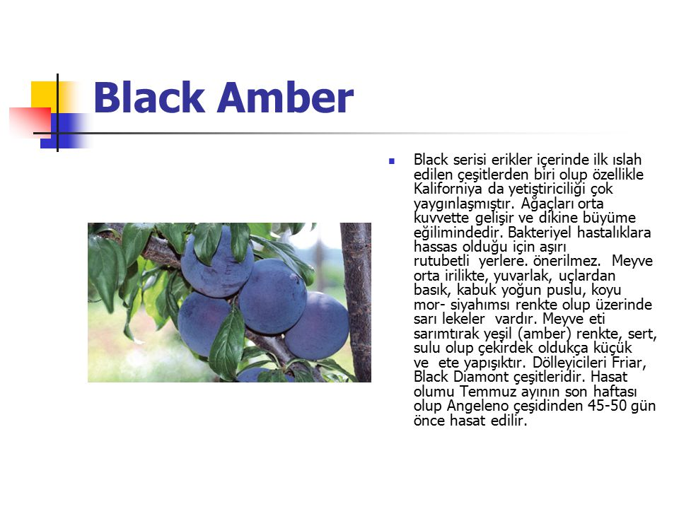 Black Amber Black serisi erikler içerinde ilk ıslah edilen çeşitlerden biri olup özellikle Kaliforniya da yetiştiriciliği çok yaygınlaşmıştır. Ağaçlar