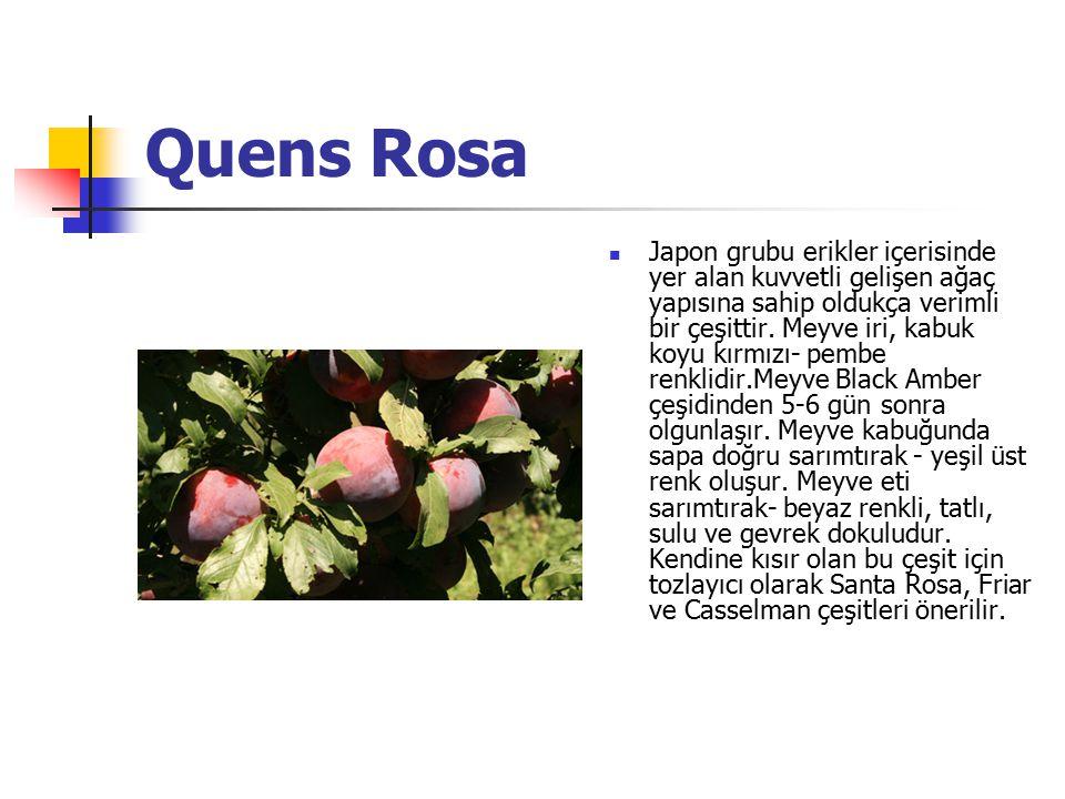 Quens Rosa Japon grubu erikler içerisinde yer alan kuvvetli gelişen ağaç yapısına sahip oldukça verimli bir çeşittir. Meyve iri, kabuk koyu kırmızı- p