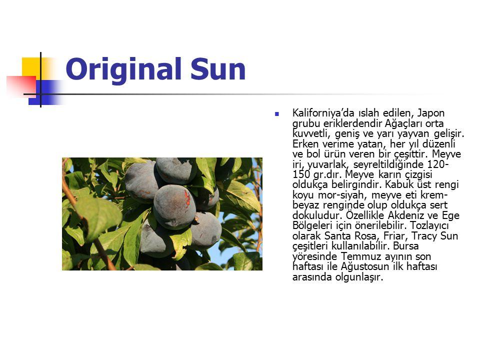 Original Sun Kaliforniya'da ıslah edilen, Japon grubu eriklerdendir Ağaçları orta kuvvetli, geniş ve yarı yayvan gelişir. Erken verime yatan, her yıl