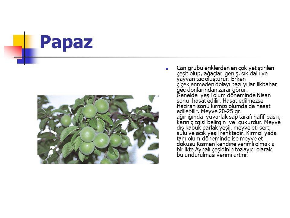 Papaz Can grubu eriklerden en çok yetiştirilen çeşit olup, ağaçları geniş, sık dallı ve yayvan taç oluşturur. Erken çiçeklenmeden dolayı bazı yıllar i