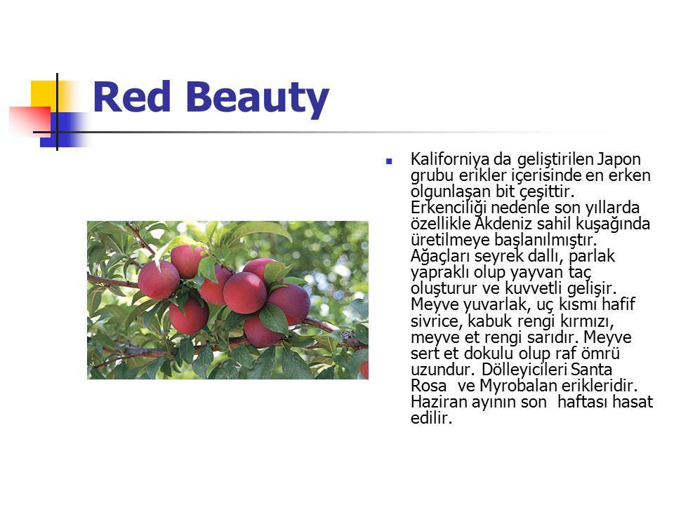 Red Beauty Kaliforniya da geliştirilen Japon grubu erikler içerisinde en erken olgunlaşan bit çeşittir. Erkenciliği nedenle son yıllarda özellikle Akd