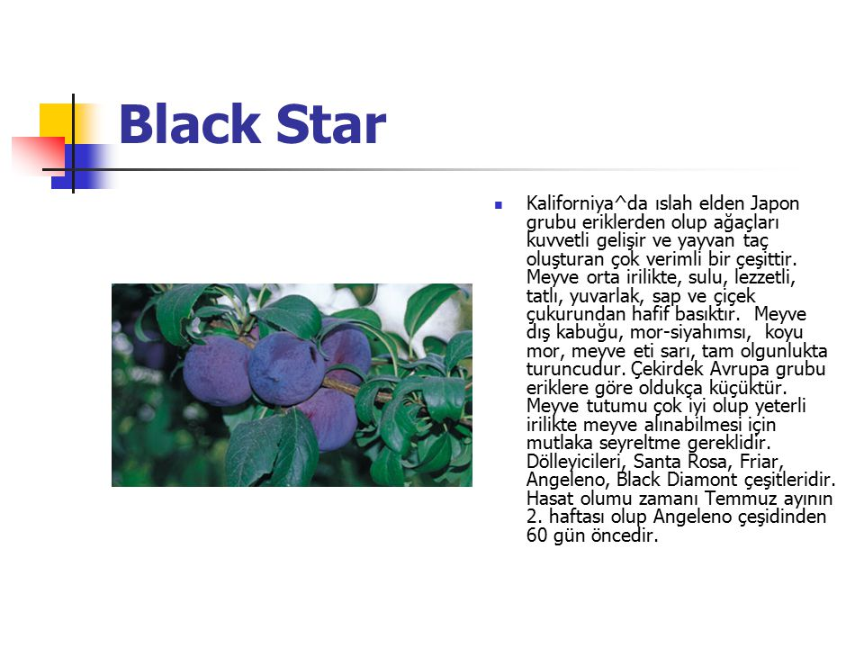 Black Star Kaliforniya^da ıslah elden Japon grubu eriklerden olup ağaçları kuvvetli gelişir ve yayvan taç oluşturan çok verimli bir çeşittir. Meyve or
