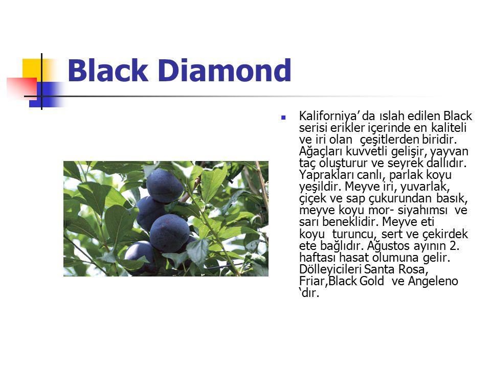 Black Diamond Kaliforniya' da ıslah edilen Black serisi erikler içerinde en kaliteli ve iri olan çeşitlerden biridir. Ağaçları kuvvetli gelişir, yayva