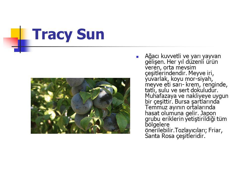 Tracy Sun Ağacı kuvvetli ve yarı yayvan gelişen. Her yıl düzenli ürün veren, orta mevsim çeşitlerindendir. Meyve iri, yuvarlak, koyu mor-siyah, meyve