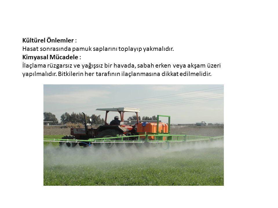 Kültürel Önlemler : Hasat sonrasında pamuk saplarını toplayıp yakmalıdır. Kimyasal Mücadele : İlaçlama rüzgarsız ve yağışsız bir havada, sabah erken v